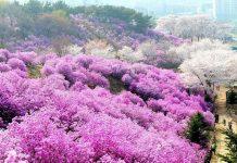 Cùng tìm hiểu du lịch Sapa mùa nào đẹp nhất?